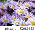 小菊 きく こぎくの写真 5298452