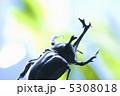 角 カブトムシ オスの写真 5308018