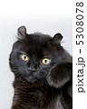 ネコ アメリカンカール 黒猫の写真 5308078