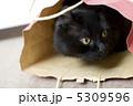 ネコ アメリカンカール 黒猫の写真 5309596