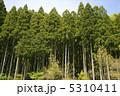 杉 森 樹木の写真 5310411