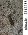 せみ ニイニイゼミ 昆虫の写真 5312238