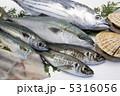 鮮魚 5316056