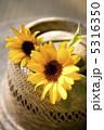 夏イメージ 和風イメージ お花の写真 5316350