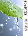 葉っぱ 葉 水の写真 5316706