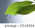 葉っぱ 雨イメージ 雫の写真 5318594