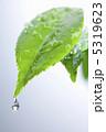 葉っぱ 雨イメージ 葉の写真 5319623