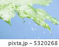 葉っぱ 雫 水滴の写真 5320268