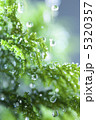 葉っぱ 雨イメージ 葉の写真 5320357