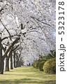 初春 お花 さくらの写真 5323178