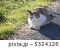 三毛猫 5324126