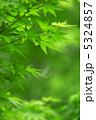モミジ 青葉 紅葉の写真 5324857