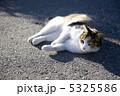 三毛猫 5325586