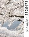 春の花 樹木 初春の写真 5326473