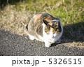 三毛猫 5326515