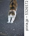 三毛猫 5326572