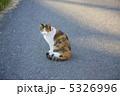 三毛猫 5326996