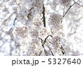 春の花 樹木 初春の写真 5327640