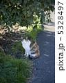三毛猫 5328497