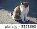 三毛猫 5328693