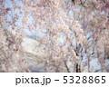 しだれ桜 5328865