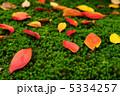 桜紅葉 木苔 黄葉の写真 5334257