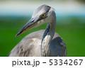 サギ 鷺 青鷺の写真 5334267