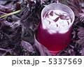赤ジソ シソジュース 赤シソの写真 5337569