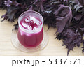 赤ジソ シソジュース 赤シソの写真 5337571