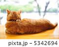 cat ねこ 猫の写真 5342694