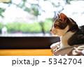 cat ねこ 猫の写真 5342704