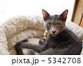 cat ねこ 猫の写真 5342708