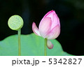 蕾 植物 花の写真 5342827