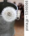 タンポポ 綿毛 植物の写真 5346066