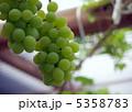 ブドウ マスカット フルーツの写真 5358783