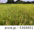 稲作 5368801
