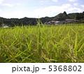 稲作 5368802