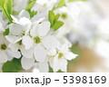 利休梅 リキュウバイ 花の写真 5398169