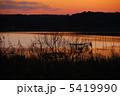 印旛沼の夕景 5419990