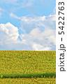 ヒマワリ ひまわり ひまわり畑の写真 5422763
