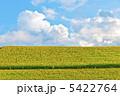 青空と大群衆のヒマワリ畑 5422764