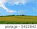 青空と大群衆のヒマワリ畑 5422842
