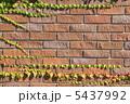 レンガ壁 ツタ 煉瓦壁の写真 5437992