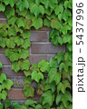 煉瓦 れんが レンガ壁の写真 5437996