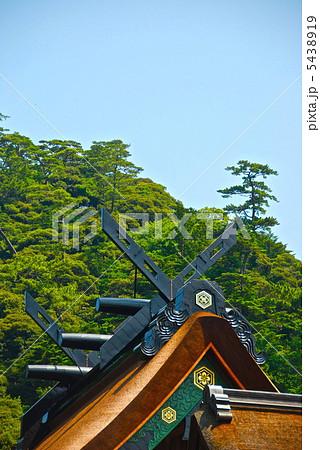 出雲大社・本殿の新しい屋根(ちゃん塗り)(出雲市大社町/島根県) 5438919