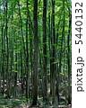 ブナ林 ぶな 美人林の写真 5440132