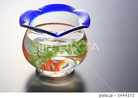 金魚鉢の写真素材 [5444372] - PIXTA