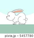 白兎 兎 ウサギのイラスト 5457780