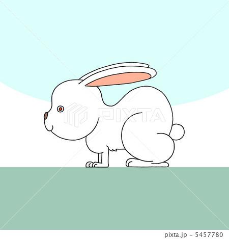 白ウサギ 5457780