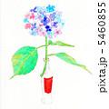水彩の紫陽花 5460855